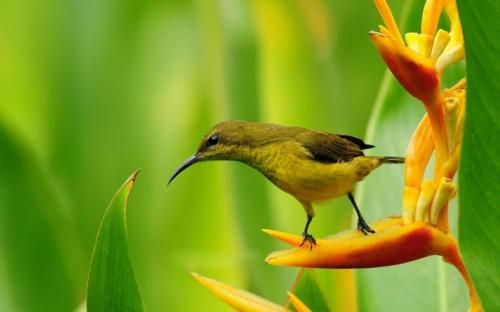 ee5d76b222137710d700d711c7f91d75--paradise-flowers-bird-of-paradise